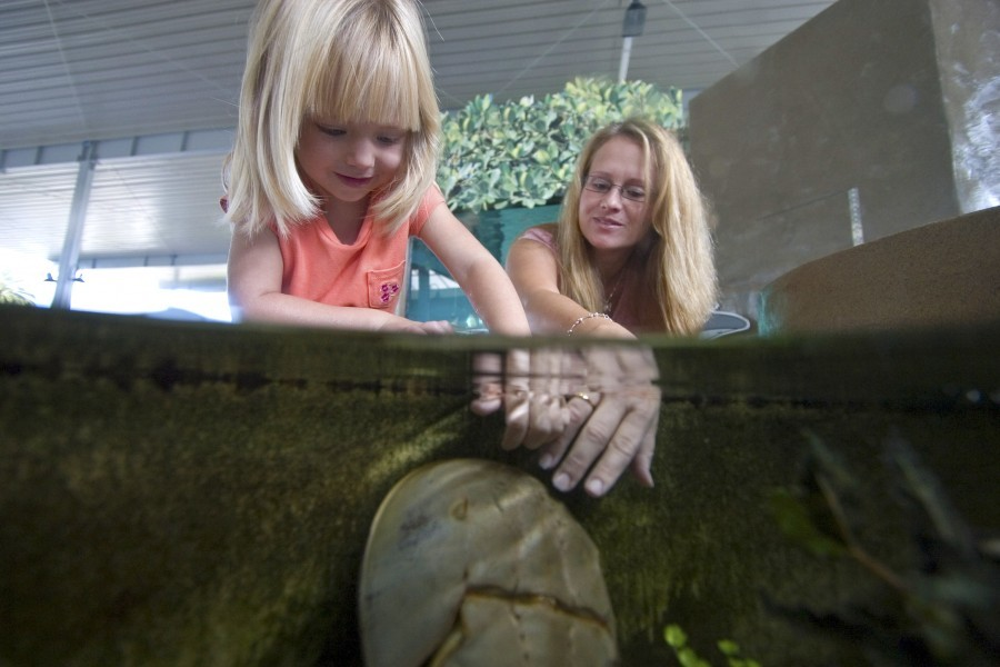 A guest and child enjoy Mote Aquarium's Contact Cove, a touch tank that allows visitors to get up-close-and-personal