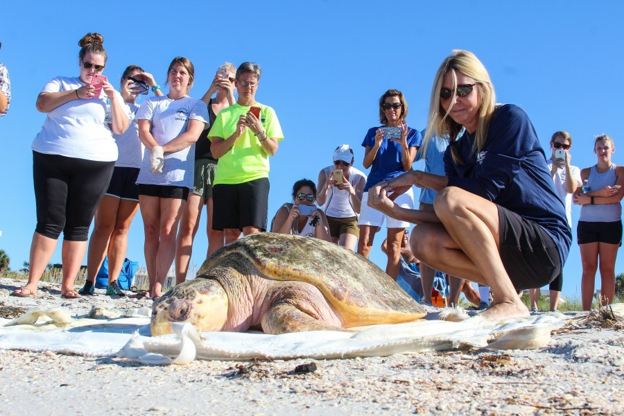 Lynne Byrd (far right) and colleagues release a rehabilitated sea turtle. Credit Mote Marine Laboratory.