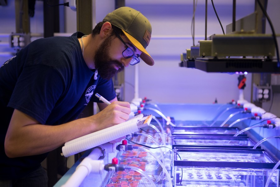 Mote Coral Research Supported by New Arthur Vining Davis Foundations Grant