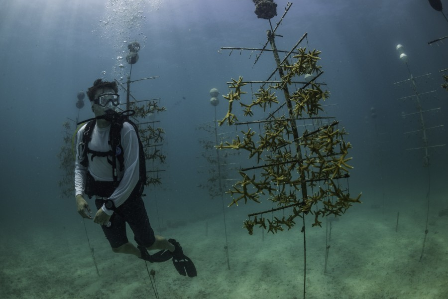 Chasing Coral cast member Zack Rago visited Mote's underwater coral nursery just off of Summerland Key.
