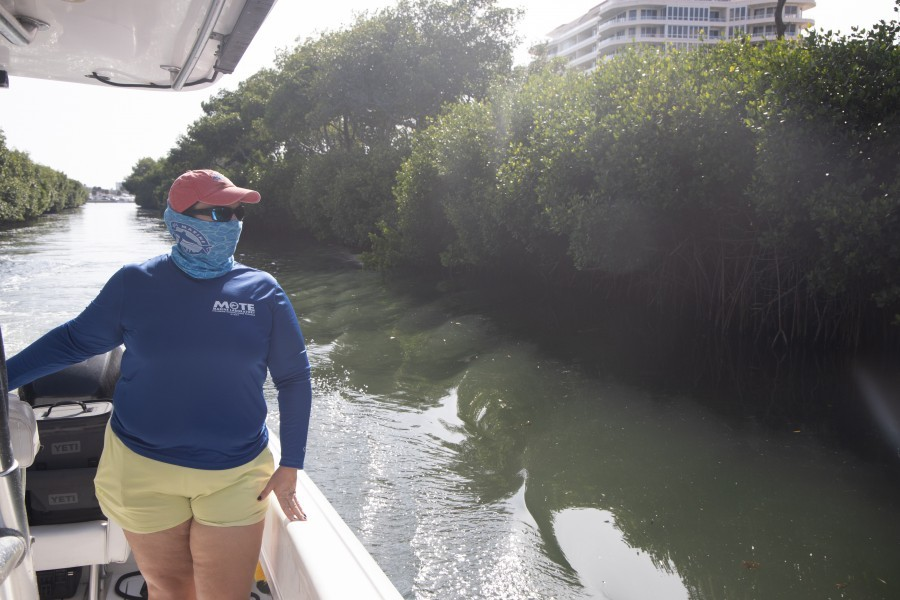 Mote Stranding Biologist Amber Lea Kincaid on a boat on local waterways.