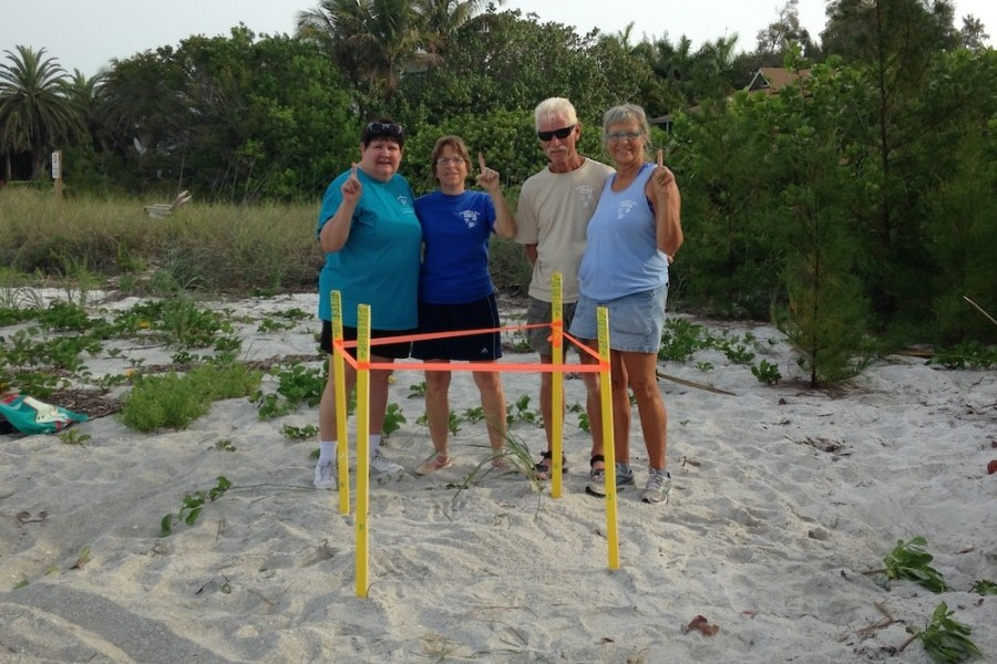 First sea turtle nests of the season found on Longboat Key and Casey Key
