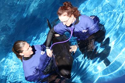 Dolphin & Whale Hospital