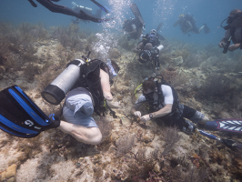 Retired Staff Sgt. Bobby Dove, Green Beret in the U.S. Army Special Forces, left, and Billy Costello, retired Sgt. 1st Class, U.S. Army, right, plant a fragment of staghorn coral on Mote Marine Laboratory's coral restoration area near Looe Key reef i