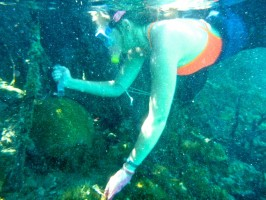 New College student Constance Sartor collects coral mucus samples. Credit: Constance Sartor