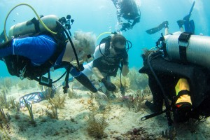 Dr. Michael P. Crosby, Mote President & CEO (left), plants corals with Billy Costello, retired Sgt. 1st Class, U.S. Army and SCUBAnaut Zachary Haeberle, 16, of Palm Harbor, plant corals.