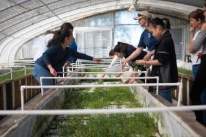 Students harvested sea vegetables for the Sarasota Farmer's Market.