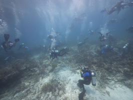 Erich Bartels, Manager of Mote's Coral Reef Monitoring and Assessment Program who oversees the staghorn coral nursery project, supervises the underwater work of restoring corals undertaken by youths from SCUBAnauts International and members of the Co