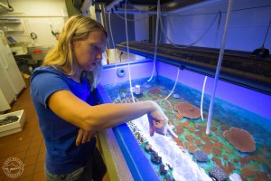 Mote Coral Health & Disease Research Program Manager Dr. Erinn Muller points to coral samples in her lab at Mote.