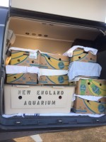Fisher in the private plane.  Fisher is in the plastic carrier.  Each of the banana boxes holds a juvenile Kemp's ridley sea turtle.  They were later flown to marathon for rehabilitation at the Turtle Hospital.