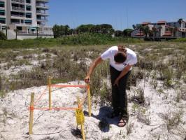 Kristen Mazzarella of Mote checks on a sea turtle nest.
