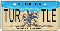 Sales of the Florida Sea Turtle License Plate support the Sea Turtle Grants Program, which recently gave a generous grant to Mote Marine Laboratory.