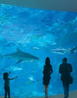 The building will have more than 110,000 square feet of space, with exhibits totaling more than 1 million gallons and featuring a stunning array of marine species. Rendering subject to change.