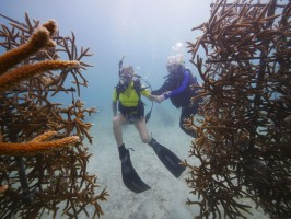 Florida Rep. Holly Raschein (left) dives with Mote President & CEO Dr. Michael P. Crosby in Mote's underwater coral nursery in 2014. Credit: Joe Berg/Way Down Video