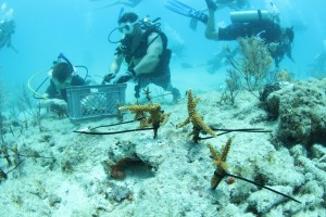 SCUBAnauts (left) plant corals with CWVC member Tanner Kuth.