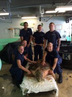 Coast Guard officials pose with Mrs. Turt Lee, a loggerhead sea turtle they rescued,  in the Sea Turtle Rehabilitation Hospital at Mote Marine Laboratory.