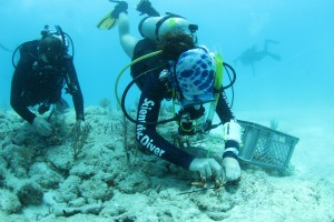 Luke Murphy and (right) Vivian Foisy plant coral on Hero's Reef;