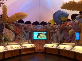 Become the size of a shrimp as you step inside a 10X larger-than-life replica of a coral reef found in the Florida Keys National Marine Sanctuary.
