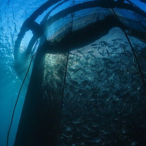 Fresh Water Aquaculture Sea Aquarium Aquarium