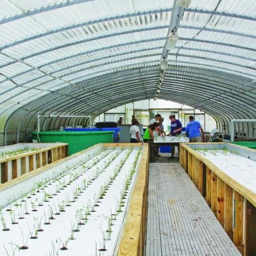 Aquaponic Fish & Veggies Worth Their Salt | News Press