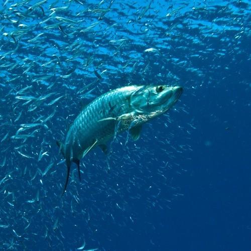 Shark Sighting ź?存图片、免版税图片及矢量图 Shutterstock