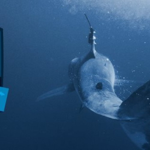 Expedition New York - Learning more about white shark nurseries