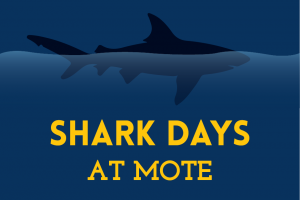 Shark Days at Mote