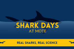 Shark Days at Mote 2019