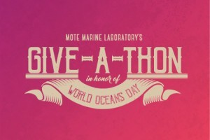 World Oceans Day Give-a-thon