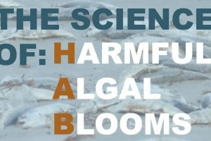 Nov. 15 in Sarasota: Harmful algal bloom panel discussion