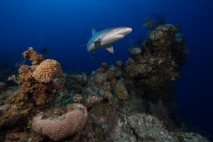 World-renowned shark expert brings global shark conservation and collaboration program to Mote