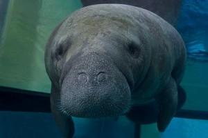 Note to Aquarium visitors