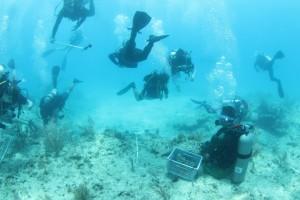 Unique partnership restores Florida's reef