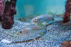 Marine & Freshwater Aquaculture