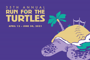 Run, walk or crawl for sea turtles: Run for the Turtles registration now open!