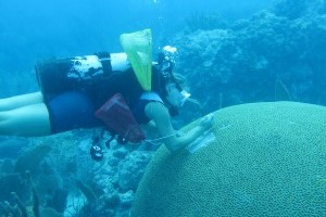 Major study improves understanding of stony coral tissue loss disease