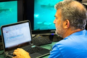 Mote awarded $500,000 NFWF grant to electronically monitor fisheries in the Gulf of Mexico