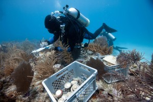 Losing Corals? Not on our watch!