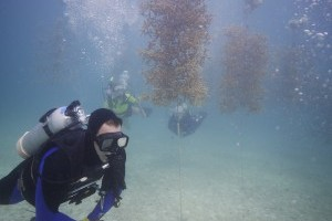Coral Reef Monitoring & Assessment Program