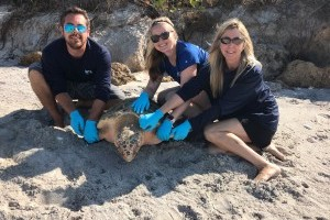 Sea turtle released after rehab at Mote