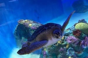 Friday Yoga Flows with Florida Blue: Sea Turtles