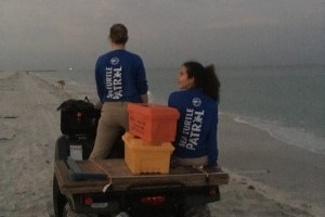 Mote Marine Laboratory's sea turtle program gets help from Florida drivers