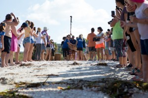 Satellite tagged sea turtle released from Lido Beach