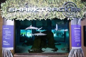 Volunteer Aquarium Maintenance Diver Informational Session