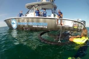 Mote rescues leatherback sea turtle off Lido Key
