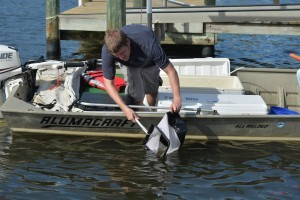 Mote releases hatchery-reared snook into Phillippi Creek