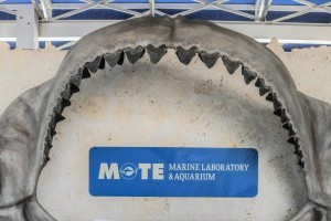 Megalodon Jaw & Fossil Creek
