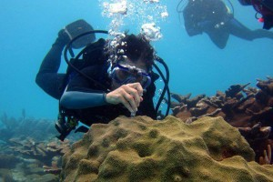 Coral Reef Ecology & Microbiology