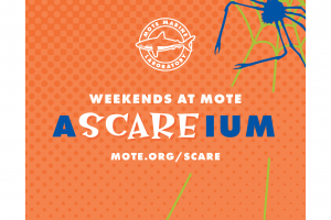 Weekends at Mote-A-scare-ium