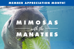 Member Appreciation Month: Mimosas with the Manatees